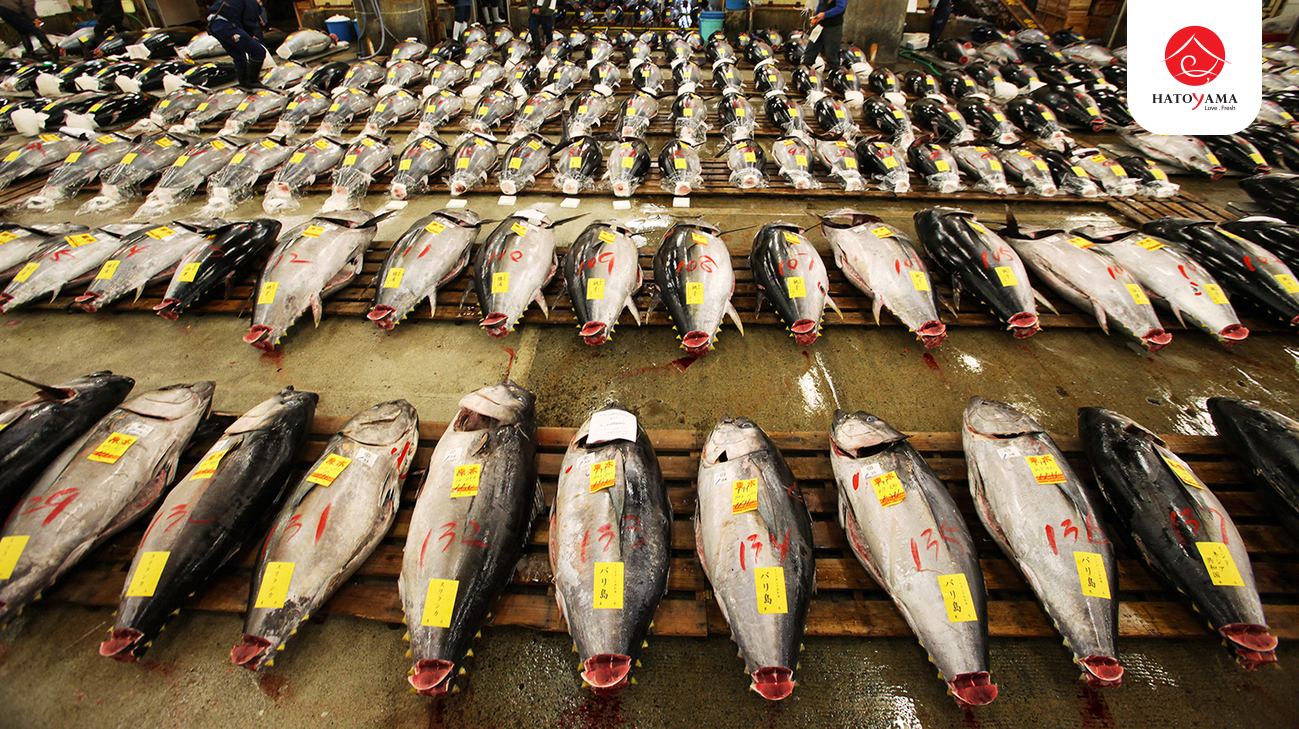Tuna are arranged prior to the first auction of the year at Tsukiji Fish Marketin Tokyo inJanuar
